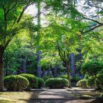 5-zasad-dobrze-oswietlonego-ogrodu